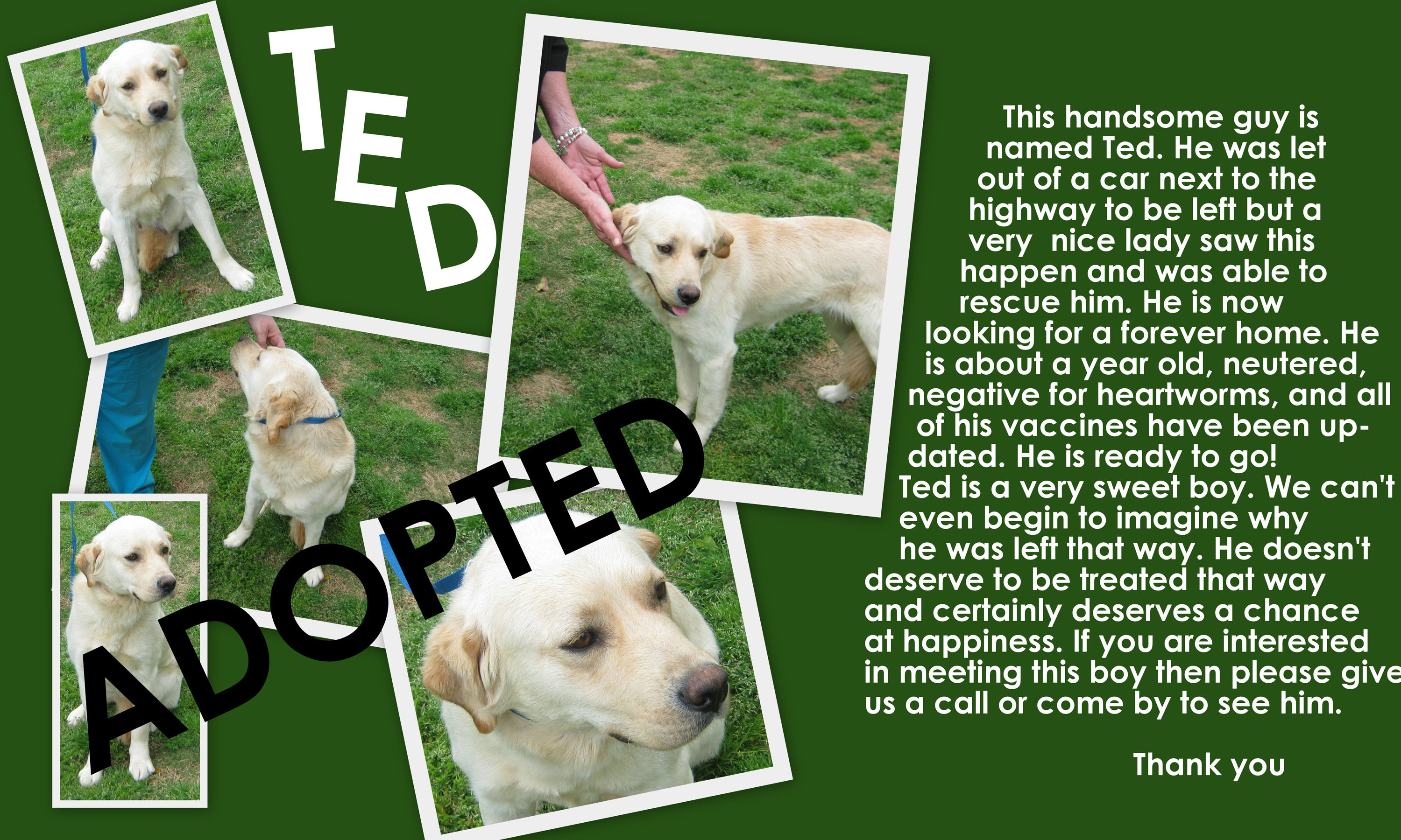 Ted-Adopted