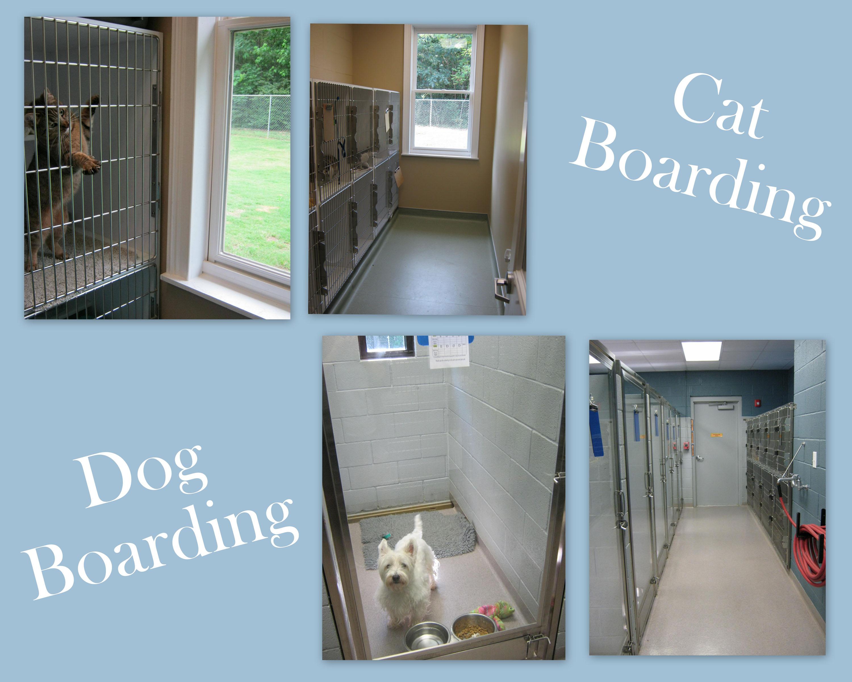 DOG & Cat BOARDING PX