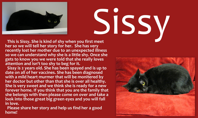 Sissy